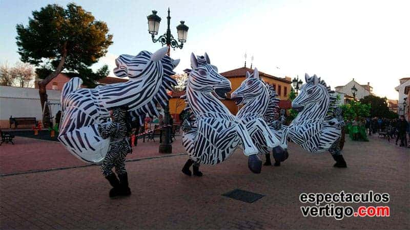 01-Zebras